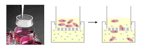 细胞transwell实验
